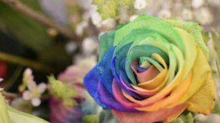 個性を表す虹色の薔薇
